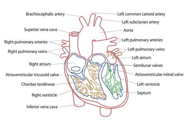 中心静脈ポートの簡単な初歩や基本的な使い方・利用方法・仕様方法・やり方