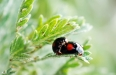 macro Ladybug on leaf. Spring nature